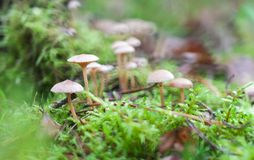 Small toadstools Stock Image