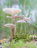 Small toadstools Stock Photo