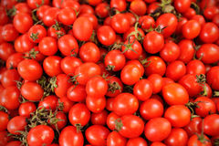 Small tomato Stock Image