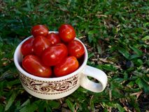 Small tomato in a cup. Royalty Free Stock Photo