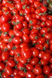Small Tomatoes. Being displayed for sale at the farmer's market Royalty Free Stock Image