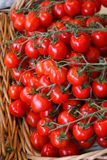 Small Tomatoes. Small and juicy tomatoes in a basket at the farmers' market royalty free stock images
