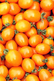 Small tomatoes Royalty Free Stock Photography