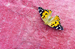 A small tortoiseshell butterfly Royalty Free Stock Image