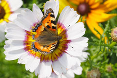 Small tortoiseshell butterfly Stock Photo