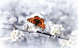 Small Tortoiseshell butterfly on branch of fruit b Royalty Free Stock Photo