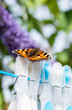 Small Tortoiseshell butterfly on clothes pegs. Small Tortoiseshell butterfly (Aglais urticae) resting on clothes pegs on a washing line Stock Photo