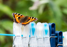 Small Tortoiseshell butterfly on clothes pegs. Small Tortoiseshell butterfly (Aglais urticae) resting on clothes pegs on a washing line Royalty Free Stock Images