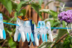 Small Tortoiseshell butterfly on washing line. Small Tortoiseshell butterfly (Aglais urticae) resting on clothes pegs on a washing line Royalty Free Stock Photos