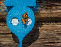 Small tortoiseshell. First spring butterfly on a blue wooden shutters Stock Photos