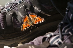 Small tortoiseshell on a hiking boot. Small tortoiseshell butterfly & x28;Aglais urticae& x29; warming on a hiking boot Stock Photo