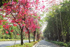 The flower road of china Royalty Free Stock Images