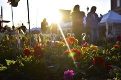 Small town flower fair Stock Photos