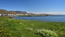 The small town Skagaströnd in Iceland. Peninsula Skagi. The small town Skagaströnd in Iceland. View with ocean and flowers in the front. Peninsula Skagi royalty free stock photo