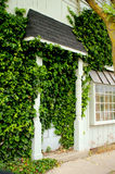 Small Town Store Front Door Covered in Ivy Stock Image