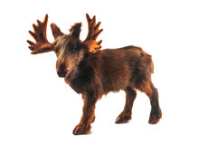 Small toy moose Royalty Free Stock Photo