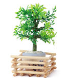 Small toy tree in pot, wooden sticks Royalty Free Stock Photo