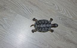 A small toy turtle stock images