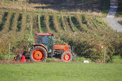 Small Tractor for Berry Farm Stock Photography
