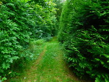 Small Trail. This image depicts a small trail in a wooded area Stock Photo