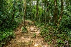 A small trails in the green dense jungle Stock Image