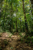 A small trails in the green dense jungle Royalty Free Stock Photography