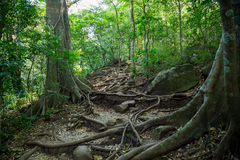 A small trails in the green dense jungle Royalty Free Stock Images