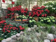 A small train that shuttles through the flowers in the flower house. A small toy train that shuttles through the bright flowers in the flower house, when it is stock photo