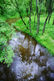 Small tranquil river. In an environment of trees Stock Images