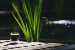 Small transparent double wall glass cup of fresh brewed coffee placed on a natural wooden surface. In front of a plant filled pond stock photo