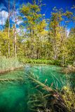 Small transparent lake in the Plitvice National Park Royalty Free Stock Photo