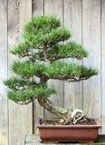 Small Tree Royalty Free Stock Photography