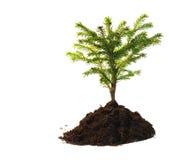 Small tree stock photo