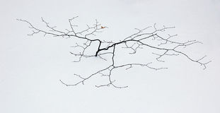 A small tree Royalty Free Stock Images