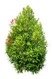 Small Tree Royalty Free Stock Photos