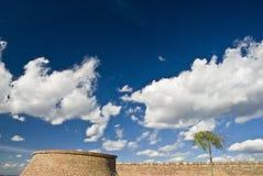 Small tree. Big sky and brick wall stock image