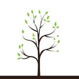 Small tree Stock Photography