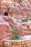 Small tree in al-Siq in Petra, Jordan. Petra is one of the New Seven Wonders of the World.  stock photos