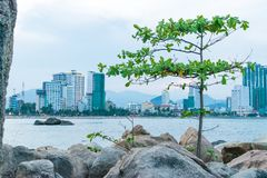 Small tree on beach with stones with city background in sunset royalty free stock photos
