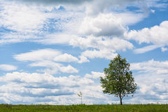 Small tree and big tree Royalty Free Stock Images