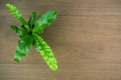 Small tree in black plastic flowerpot top view on wooden background with copy space.  stock photo