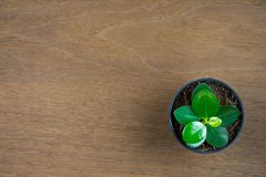 Small tree in black plastic flowerpot top view on wooden background with copy space.  royalty free stock image