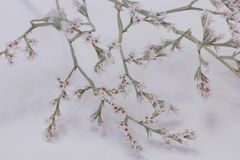 Small tree in bloom stock images