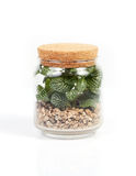 Small tree in a bottle. Royalty Free Stock Photos