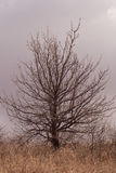 Small tree with branches without leaves Royalty Free Stock Photo
