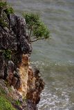 Small tree on the cliff Stock Photography