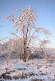 Small tree coated by hoarfrost at warm sunlight Stock Photo
