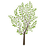 Small tree colored on background Stock Photos