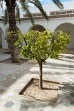 Small Tree in Courtyard. Small Shrub-like Tree in Luxury Courtyard Stock Photography