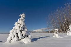 Small tree covered in snow. Stock Images
